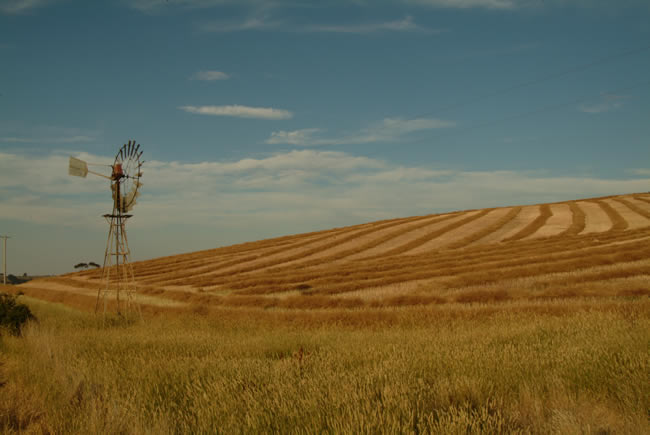 Windmill on hay field, at Ceres, near Geelong, Victoria, Australia