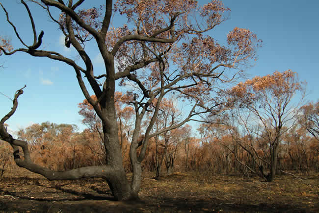Scorched Otways, near Anglesea, Otways Forest, Victoria, Australia