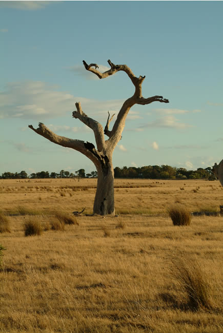 Dry summer, at Mt Duneed, near Geelong, Victoria, Australia