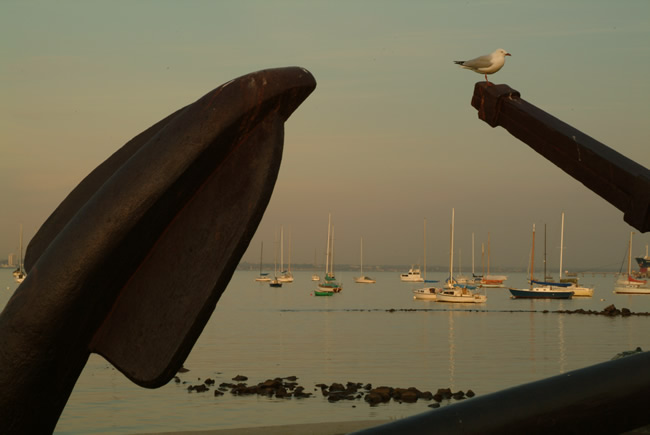 Seagull settles on an anchor at Williamstown, near Melbourne, Victoria, Australia