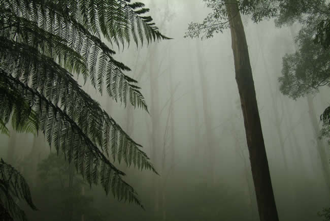 Mist on the Black Spur, near Marysville, Victoria, Australia