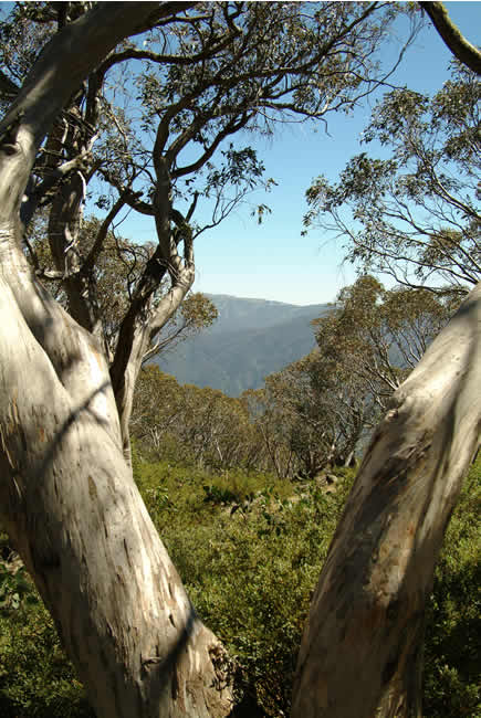 Mt Buller view from Bluff Hut on Mt Stirling, alpine Victoria, Australia