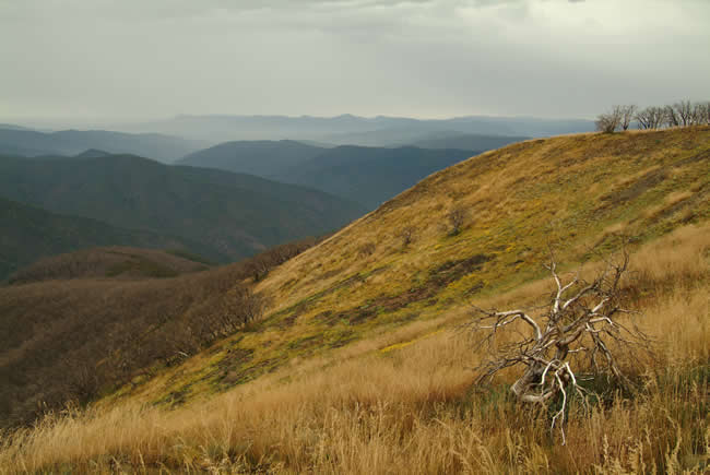 View from the Blue Rag Range, alpine Victoria, Australia