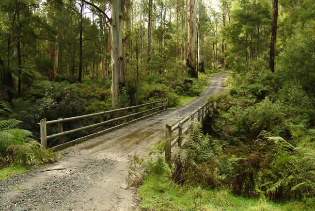 Bridge Track, Otways Forest, Victoria, Australia