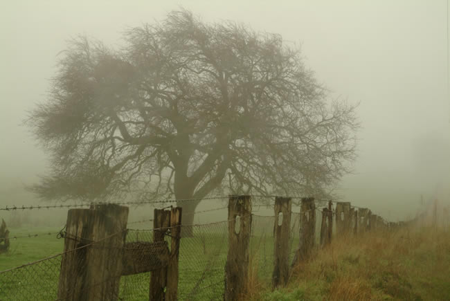 Foggy morning, Gooch's Lane, Macedon Ranges, central Victoria, Australia