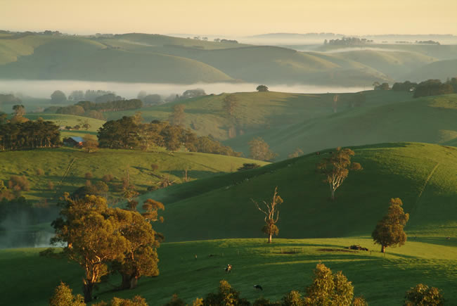 Rolling hills, Dollar, South Gippsland, Victoria, Australia