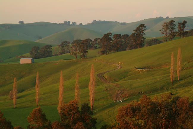 The warm light of sunset, Dollar, South Gippsland, Victoria, Australia