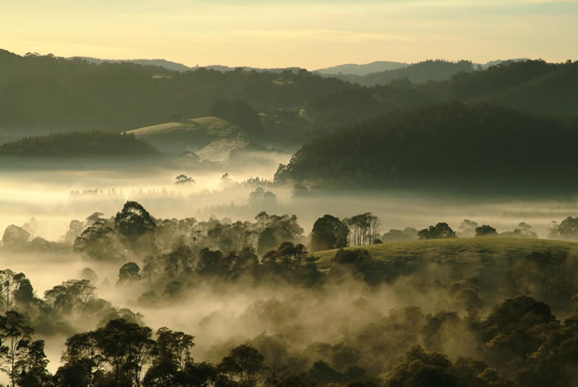 Early morning mist, Dollar, South Gippsland, Victoria, Australia