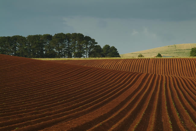Potato farm, Clarke's Hill district, near Ballarat, Victoria, Australia