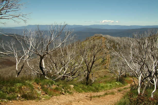 View from Mt Blue Rag, alpine Victoria, Australia