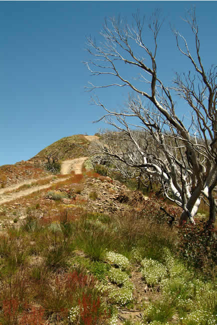 Rugged beauty, Blue Rag Range, alpine Victoria, Australia