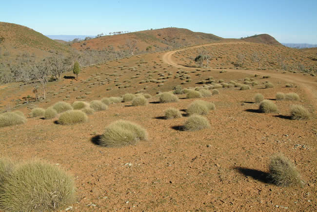 Sky Trek Track, Willow Springs Station, Flinders Ranges, South Australia