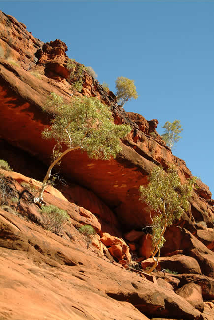 Palm Valley, MacDonnell Ranges, Northern Territory, Australia