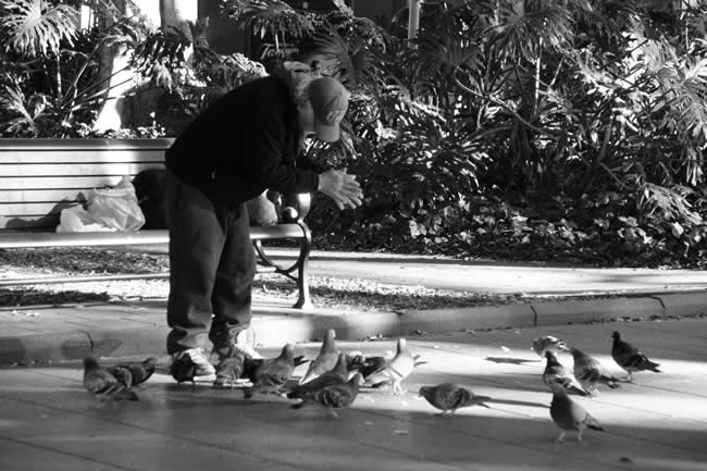 Feeding the pigeons in Hyde Park, Sydney, New South Wales, Australia