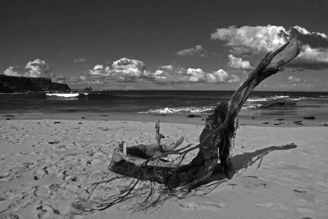 Interesting study of a beach scene framed by driftwood. On the beach, near Wonthaggi, Victoria, Australia
