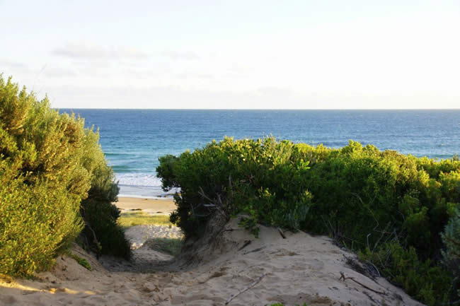 Track through the dunes to the beach, near Wonthaggi, Victoria, Australia