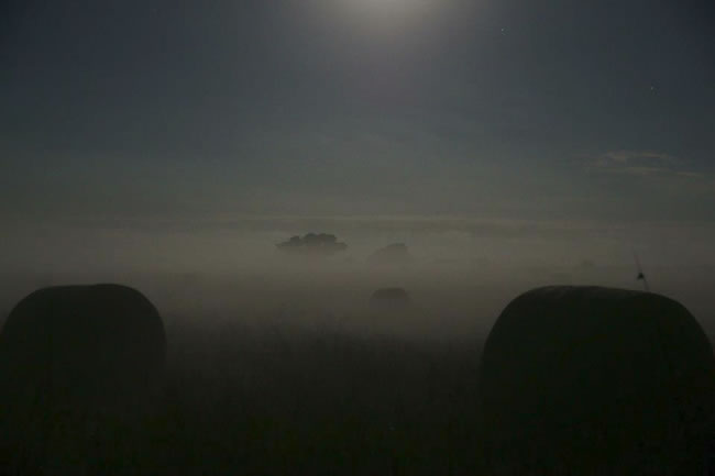 A misty morning, near Wonthaggi, Victoria, Australia