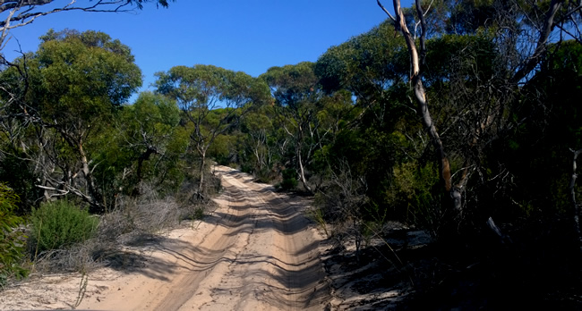 Eyre Bird Observatory access sand track, Western Australia