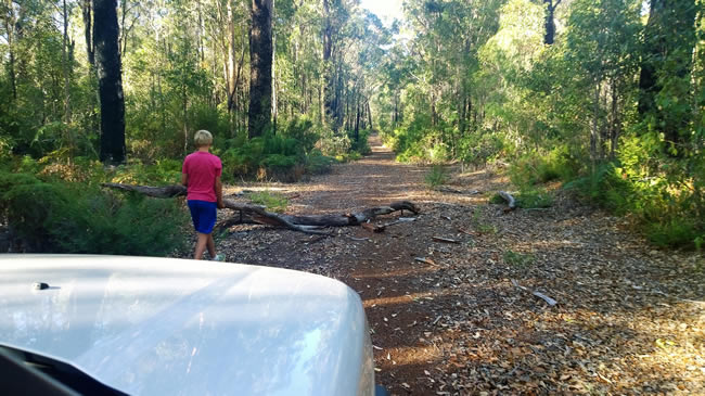 Obstructions on Seven Day Road, near Manjimup, Western Australia